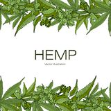 Template hemp stock illustration