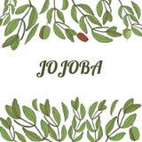 Template jojoba royalty free illustration