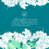 Card template with white lilies Royalty Free Stock Photos