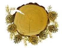 Free Card Template With Realistic Botanical Ink Sketch Of Fir Tree Branches, Gold Pinecone And Tree Ringg Trunk On White Stock Image - 127901701