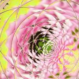 Floral card tender design of lilys in yellow and pink with effect of drops fresh morning stock illustration