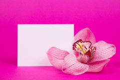 Card for text  and orchid Royalty Free Stock Photo