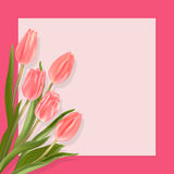 Card with tulips and border. Spring postcard light red tulips on a pink background with border Royalty Free Stock Images