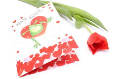 Card for Valentine day and red tulip on white background Stock Photo