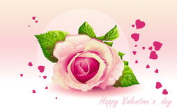 Card for Valentine's Day pink rose-EPS10. Card for Valentine's Day pink rose Stock Images