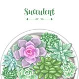 Card with various succulents in pot. Echeveria, Jade Plant and Donkey Tails.  Stock Photography