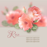 Card with vector flowers roses Royalty Free Stock Image