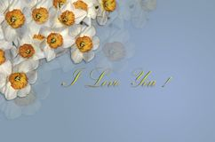 Card with white daffodils and a gold greeting I Love You on a bluish background Royalty Free Stock Photos