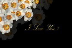 Card with white daffodils in the top corner and  greeting I Love You on a black background Royalty Free Stock Photography