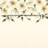 Card with white lisianthus flowers. Vector eps-10. Royalty Free Stock Photography