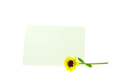 Card and a yellow flower isolated on white Stock Images