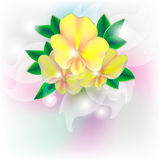 Card with yellow flowers Royalty Free Stock Images