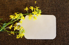 Card and yellow flowers Royalty Free Stock Photos