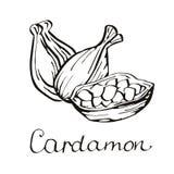 cardamom Cardamom на белой предпосылке Стоковое Фото