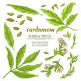 Cardamom elements set Stock Photography