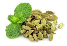 Cardamom with fresh mint Royalty Free Stock Images