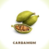 Cardamom isolated on white Royalty Free Stock Images