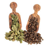 Cardamom Pods and Seeds Stock Images