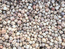 Cardamom seed Stock Photo