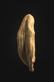 Cardamom seed on black Royalty Free Stock Photos