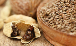 Cardamom seeds with other spices Royalty Free Stock Image