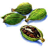 Cardamom seeds on a white background Royalty Free Stock Images