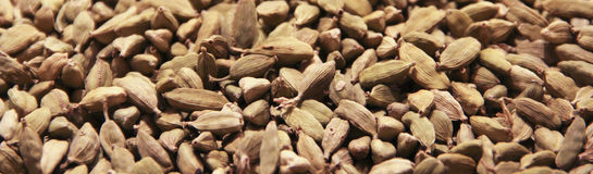 Cardamom Royalty Free Stock Image