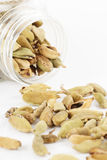 Cardamom spilled from plastic container Royalty Free Stock Photos