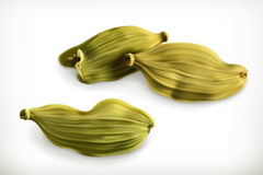 Cardamom vector icons Stock Images