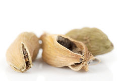Cardamom  on white background Stock Images