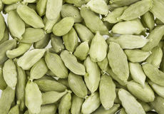 Cardamom whole Stock Images