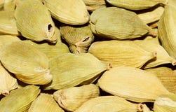 Cardamome (cardamomum d'Elettaria) Images libres de droits