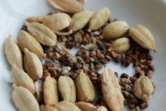Cardamomo PSpice ods y semillas Imagen de archivo libre de regalías