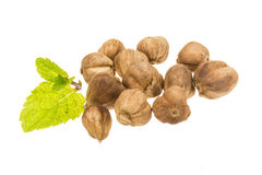 Cardamon seed Stock Photography