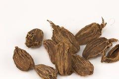 Cardamons noirs Image libre de droits