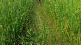 Cardan de Steadicam tiré de la fille blonde dans la position bleue de robe dans les domaines de riz en EL Nido, Philippines banque de vidéos