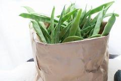 Bag full of green of Legume. Cardboard bag full of ecological green beans. Ecologic Bag full of Legume royalty free stock photography