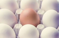 A cardboard box with chicken eggs is brown and white. Distinctive feature. Differences. Stock Photos
