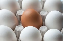 A cardboard box with chicken eggs is brown and white. Distinctive feature. Differences. A cardboard box with chicken eggs is brown and white. Distinctive Stock Image