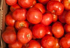 Cardboard box of freshly picked, ripe beef tomatoes royalty free stock photos