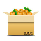 Cardboard box with oranges for sale Royalty Free Stock Image