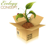 Cardboard Box with Sprout Royalty Free Stock Photo