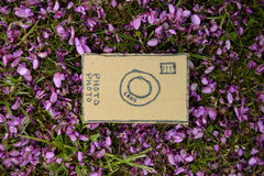 Cardboard camera and violet flowers Stock Photos