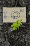 Cardboard camera and young leaves, in spring. Young leavesand bark of chestnut tree, in spring Stock Image