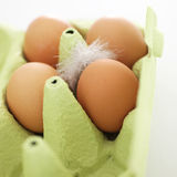 Cardboard carton with eggs and a feather Royalty Free Stock Image