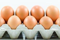 Cardboard egg box with  eggs Stock Photos