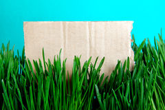 Cardboard on the Grass Stock Photography