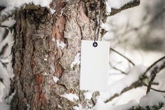 Cardboard label on pine tree Stock Photo