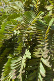 Cardboard Palm Leaves Close Up Royalty Free Stock Photo