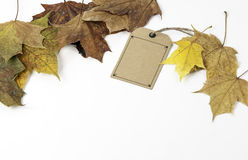 Cardboard price tags and the maple leaf on a white background Royalty Free Stock Image